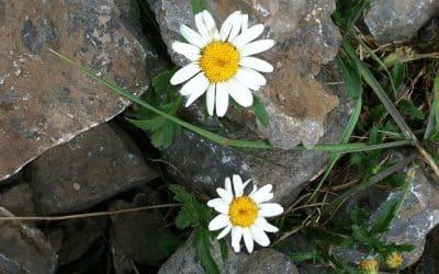 Workshop Zingeving en veerkracht – NIEUW